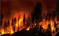 Temperature Extremes and Wildfires